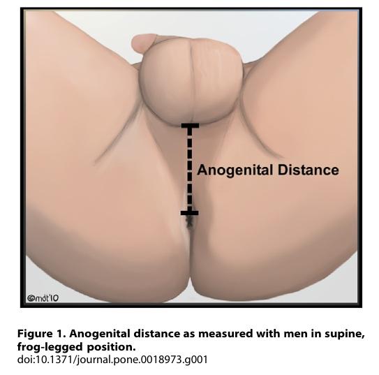 Between Penis And Anus 52